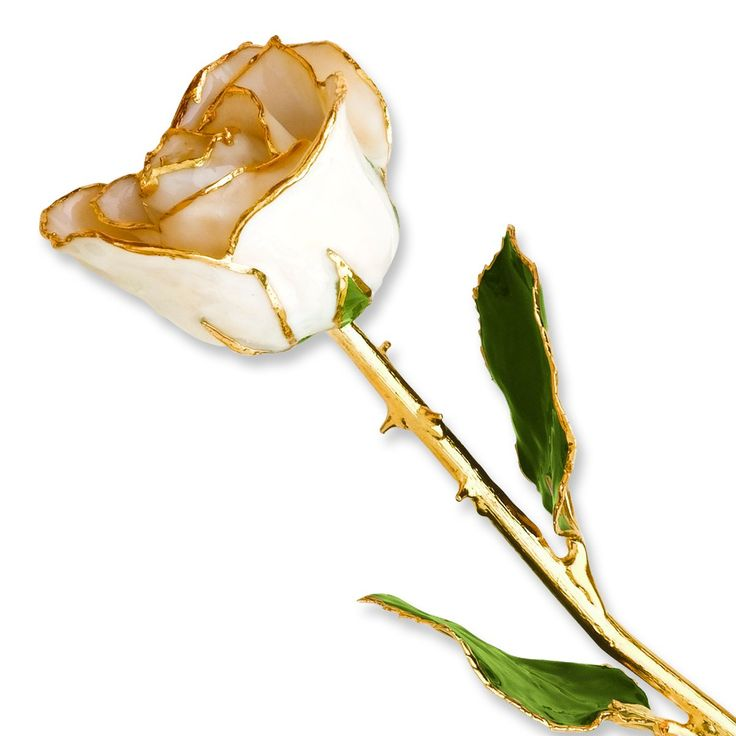 Long Stem Dipped 24K Gold Trim White Satin Lacquered Genuine Rose In Gold Gift Box. 24k Gold Dipped White Satin Lacquered Genuine Rose. Each rose measures 11-12 inches long and is packaged in a lovely gift box with clear viewing window. This White Satin rose is a perfect gift either by itself or combined with any of our other beautiful colors to create a colorful bouquet. Rose will last for years.