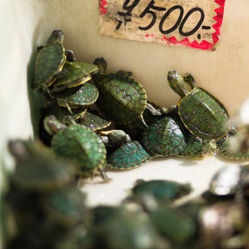 Red Ear Slider Turtle Tank Decor Ideas