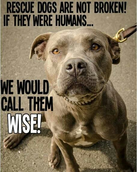 arguments on why pitbulls should be For the pit bull advocacy movement (pbam), the incident will serve as a rallying cry to put a collective shoulder to the pit-bull laundering wheel i can anticipate their arguments, as i have.
