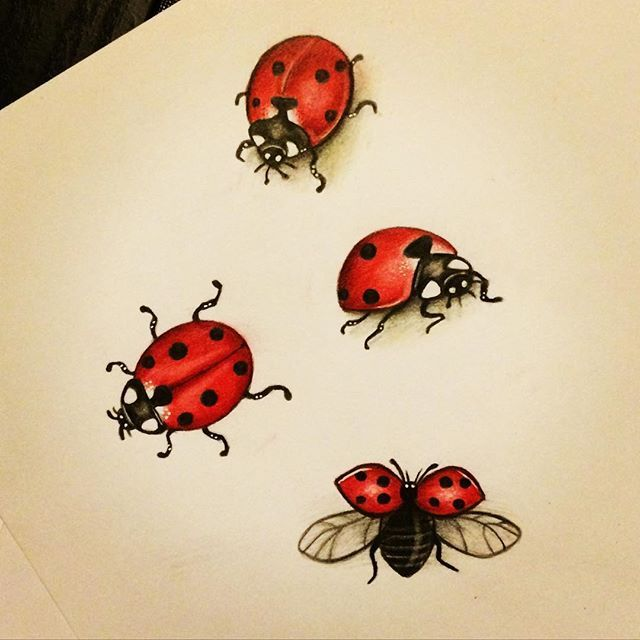 ladybug art artwork on Instagram