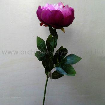Nagy lila bazsarózsa (pünkösdi rózsa)