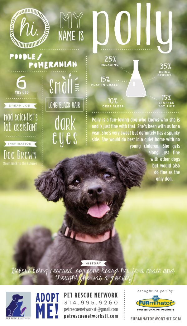 Hi. My name is Polly. I'm looking for my forever home. #pet #adoption #poster #dog #design #infographics