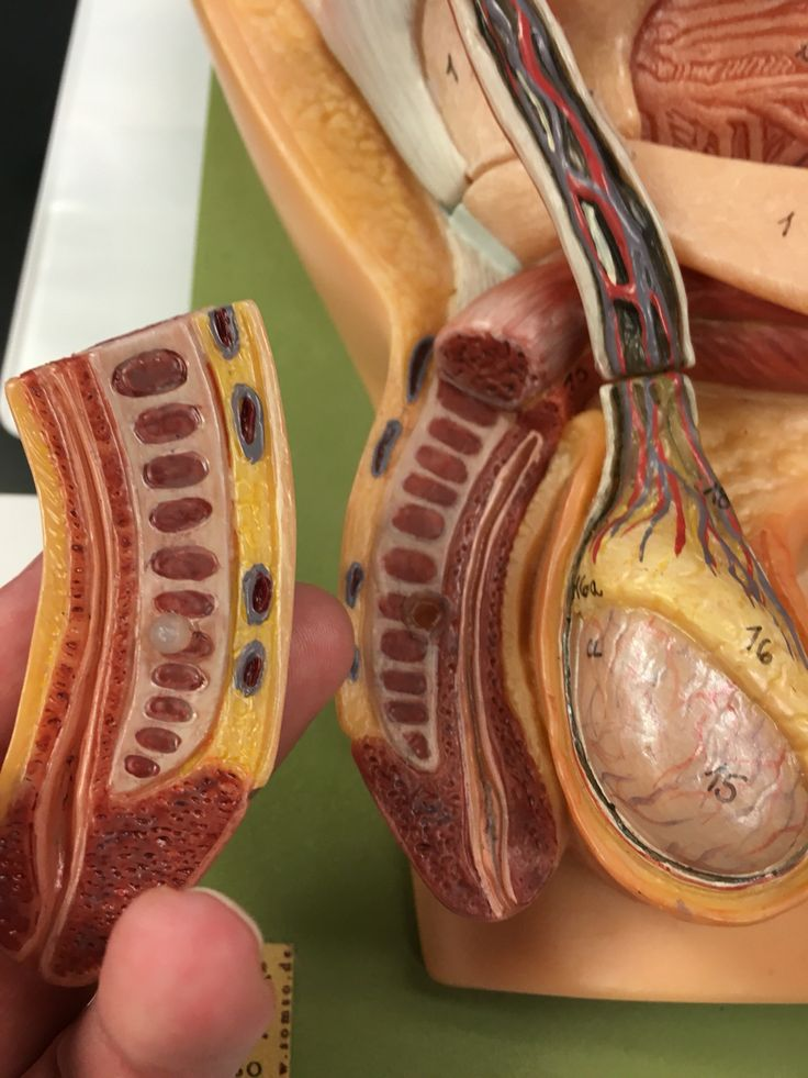 Outstanding Anatomy And Physiology 2 Lab Practical Exam Image ...