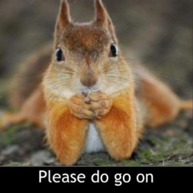 447e48b64edf23aac73d27296f6a8dd3 cute squirrel squirrel humor 54 best squirrel memes images on pinterest nature, animals and,Funny Squirrel Memes