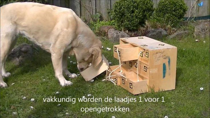 Hersenwerk voor honden Het puzzelladekastje