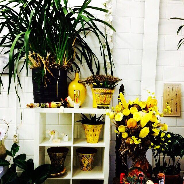 Fris en fruitig voorjaar in de BloomsStore  See you at www.blooms.nu of kom zaterdag real life langs