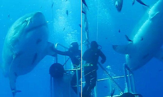 Newly released footage shows massive great white shark named Deep Blue