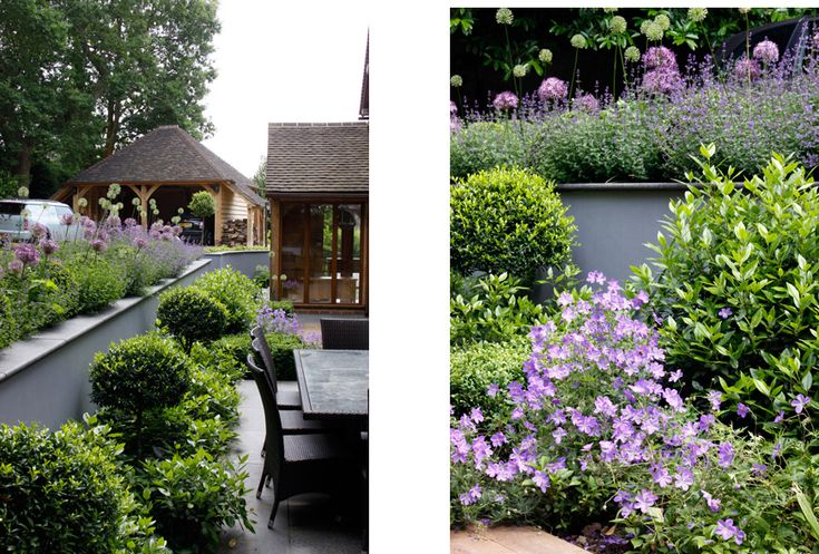 our favourite geranium