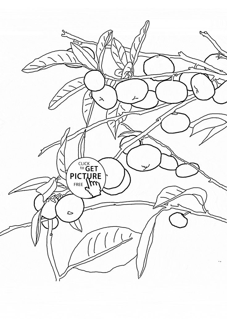 83 best Coloring pages Fruits images on Pinterest  Draw
