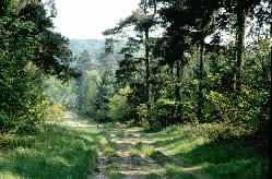 FOREST TRAIL TOWARD LITTLE OUSE - Thetford Forest - parking, toilets, dogs on lead, swimming in the river