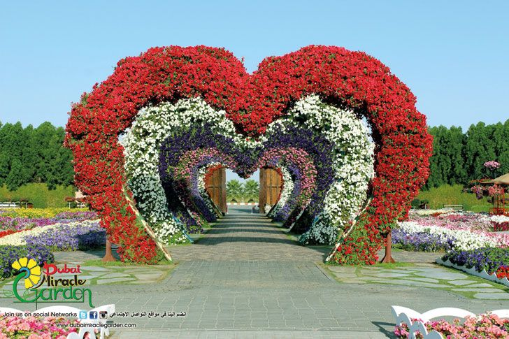 Sights and attractions - Places of interest - Dubai Miracle Garden - Discover Dubai
