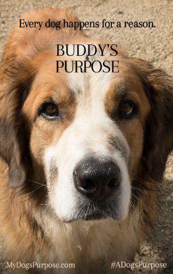 A Dog S Purpose Full Movie F