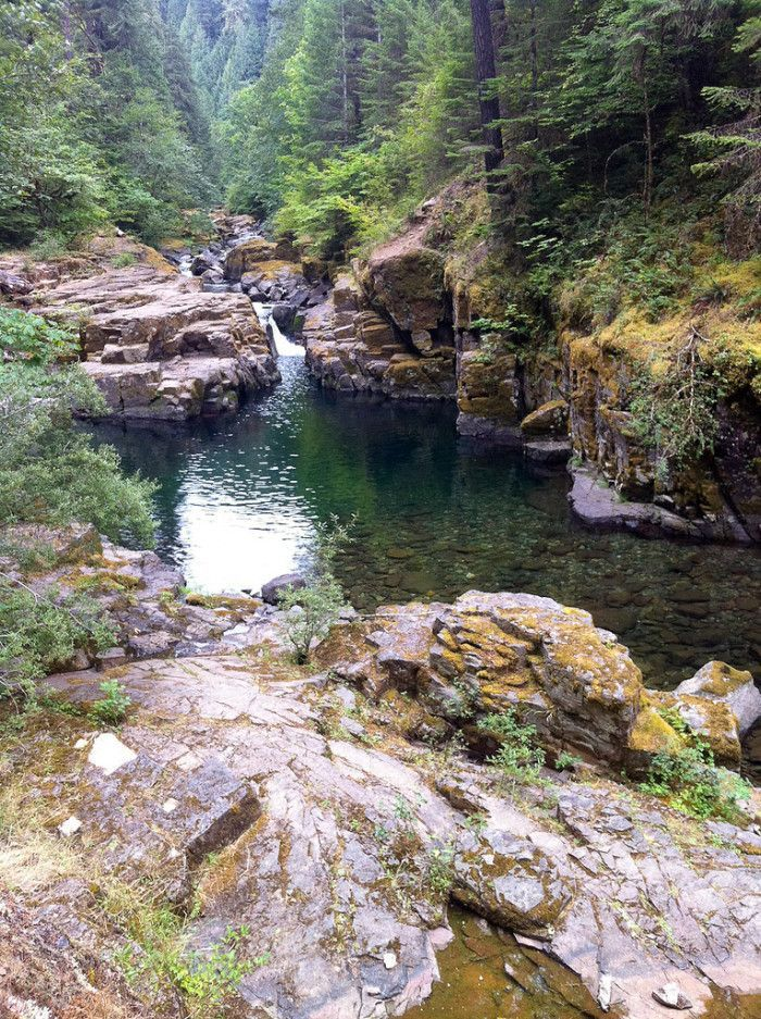 9 Oregon Swimming Holes that will make your summer epic!  8) Brice Creek, near Eugene