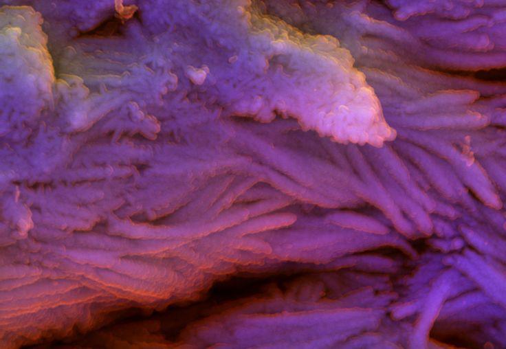 DDC-SEM of fossil - purple - 2.jpg