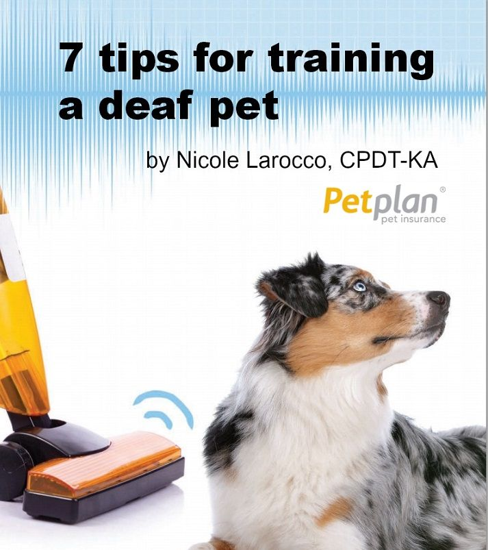 Sleight Of Hand Tips For Training Deaf Dogs Pinterest Dog Pup