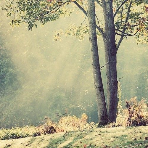 nature: Inspiration, Quotes, Tree, Dream, Beautiful, Things, Place, Light, Photography