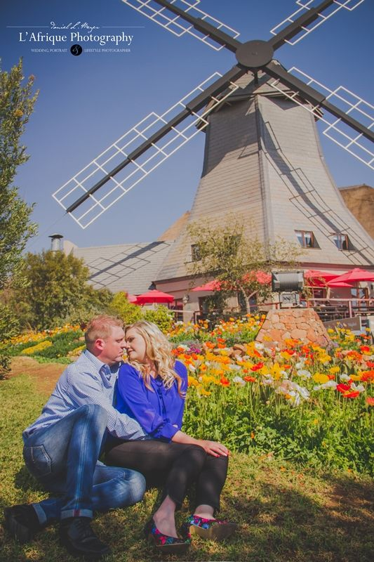 It is so romantic engagement photo with the windmill in the background and they feel if they in Holland with the flowers it is so beautiful photo by Daniel L Meyer - L'Afrique photography
