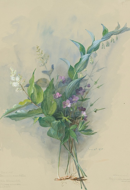 Spotted Geranium, Smooth Solomon's Seal, and Feathery Feathery False Lily-of-the-Valley by Eloise Payne Luquer