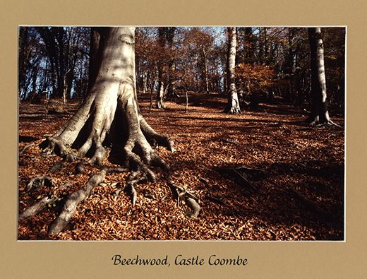 The landscape and wildlife photographer Robert Harvey used this for an exhibition; it was taken back in 2005. Robert lives in Winterbourne Bassett and the Wiltshire landscape is a great inspiration. This image is one of 12, acquired for the WSHC's Photograph & Print Collection as part of Creative Wiltshire. You can view Robert's modern work at http://www.robertharvey.net/