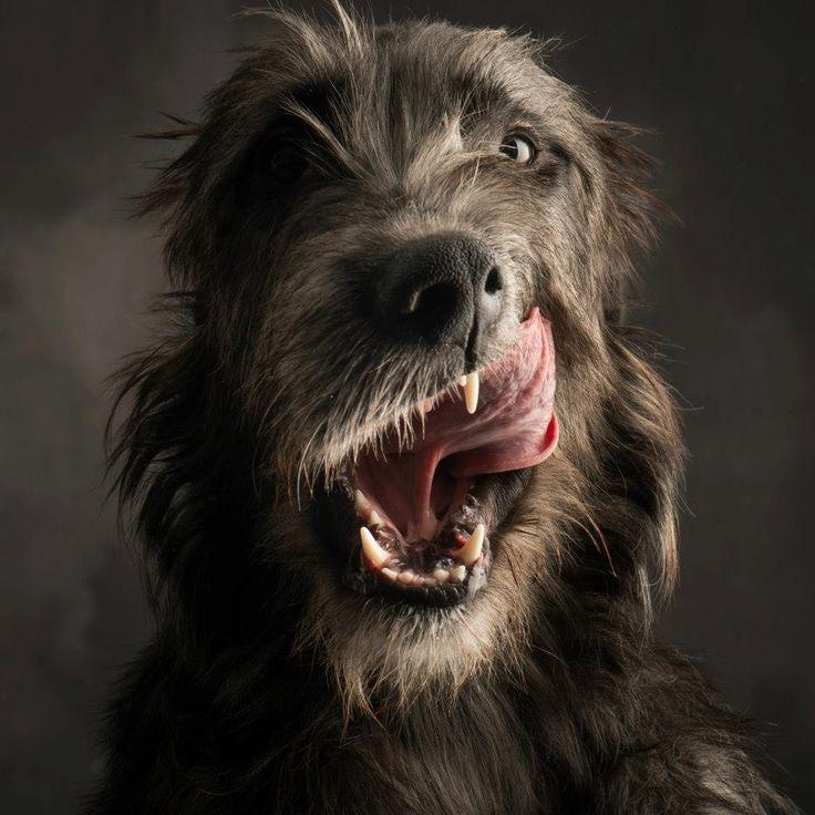 I want an Irish Wolf Hound...so bad.