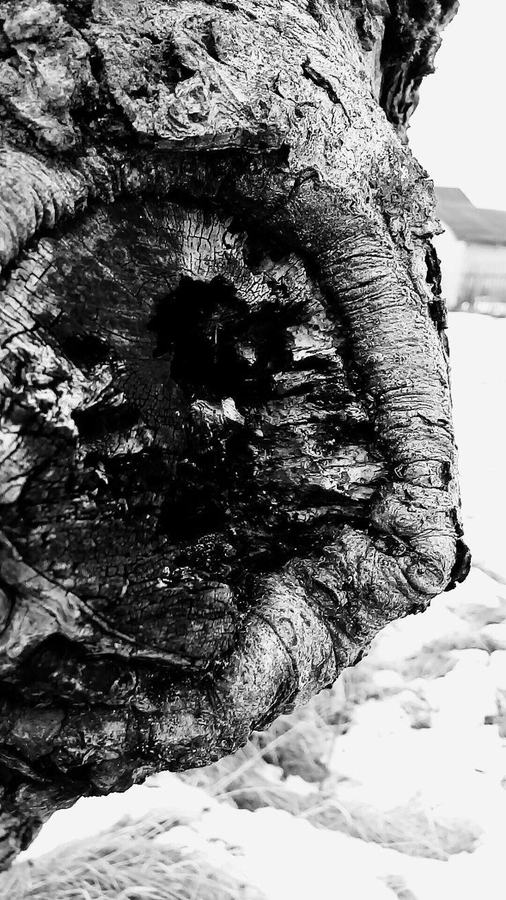 nature photography, tree, snow, black and white winter, tree damaged, bark, Polish village, my photos