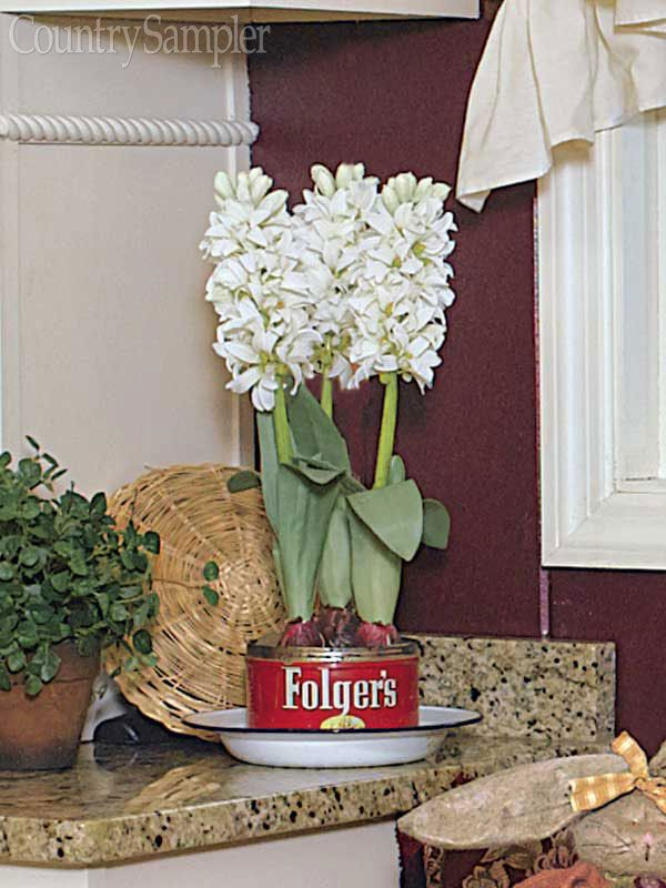 Let a vintage coffee can serve as the base for some forced bulbs on the kitchen counter. Fill the tin with pebbles, add water, and set some hyacinth, tulip, daffodil or narcissus bulbs on top with their stems facing down. Pour in more water periodically, and you'll have blooms in a month or two.