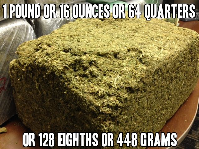 12 lb of weed  Cannabiscom  The Worlds Cannabis Site