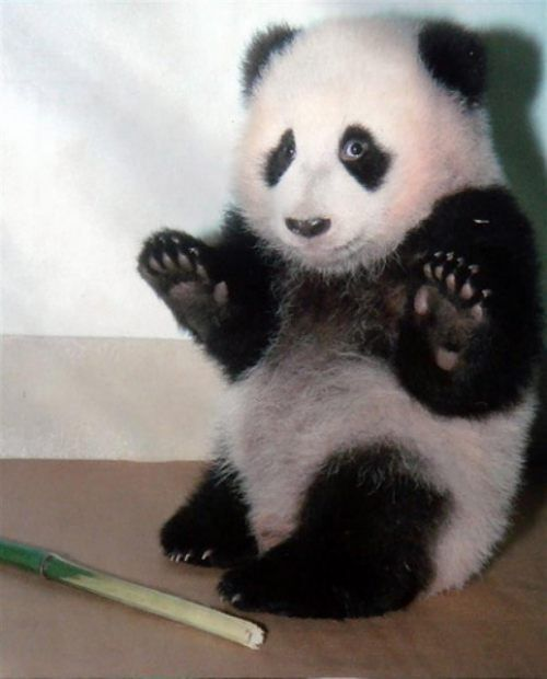 Whoa, whoa, whoa, okay! I took their bamboo... But I asked first!