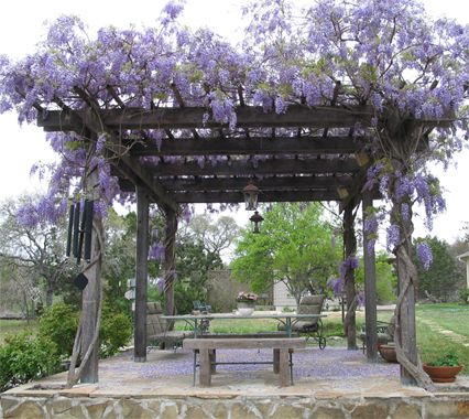 Pergola covered with wisteria -Would love to have the pergola over my deck.  I have the wisteria planted already!!