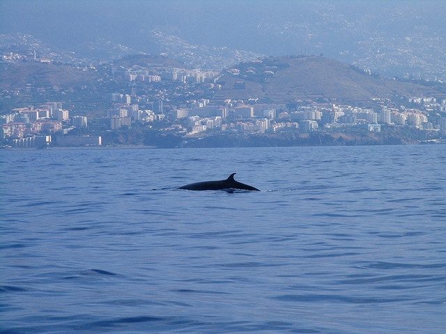 Whale watching by Madeira Islands Tourism, via Flickr