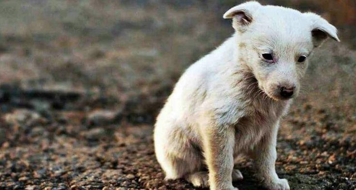 EVVIVA .......... potrò sbagliarmi, ma ne dubito, che pure i veterinari si ammalano...... tremenda vendetta..... GLIELO AUGURO... Però avrei gradito sapere il nome del veterinario, potremmo evitargli di lavorare troppo!!!Vogliamo raccontarvi una storia che ci ha lasciato senza parole. Un finale brutto a causa di avide personeincompetenti che fingono di amare gli animali ma