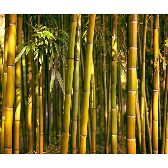 Affiliate Decomonkey Fototapete Bambus Natur 400x280 Cm Xxl Tapete Wandbild Bild Fototapeten Tapeten Wandtapete Wald Amazon De Fototapete Wandtapete Tapeten