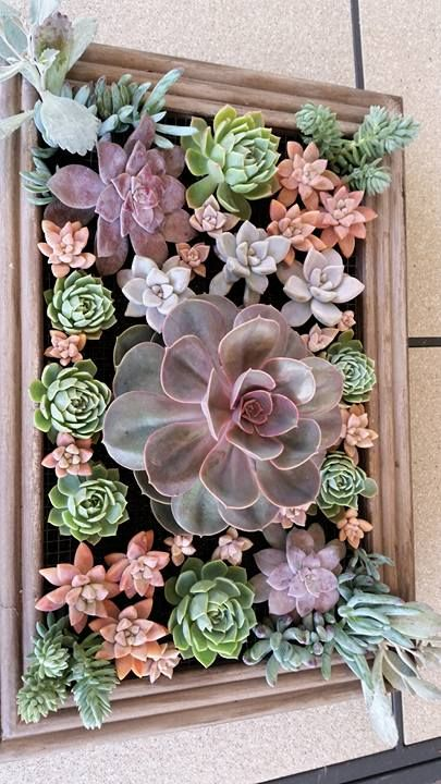 Pretty as a picture. Stacey Rundell created this very nice framed wall hanging succulent arrangement.:
