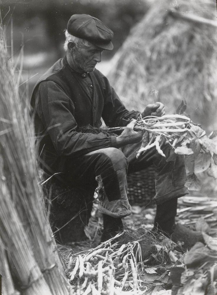 Boer uit Giethoorn in daagse werkdracht. Hij dopt gedroogde bonen. 1917 #KopOverijssel