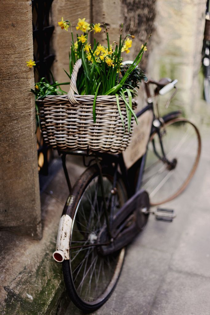 basket full of bloomsSummer Picnic, Vintage Chic, Vintage Bikes, Flower Baskets, Vintage Bicycles, Old Bikes, Daffodils, Vintage Home Decor, Yellow Flower