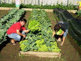 Um dos princípios básicos da agricultura orgânica é a prática da diversificação de culturas. Numa floresta todos os organismos vivos ...