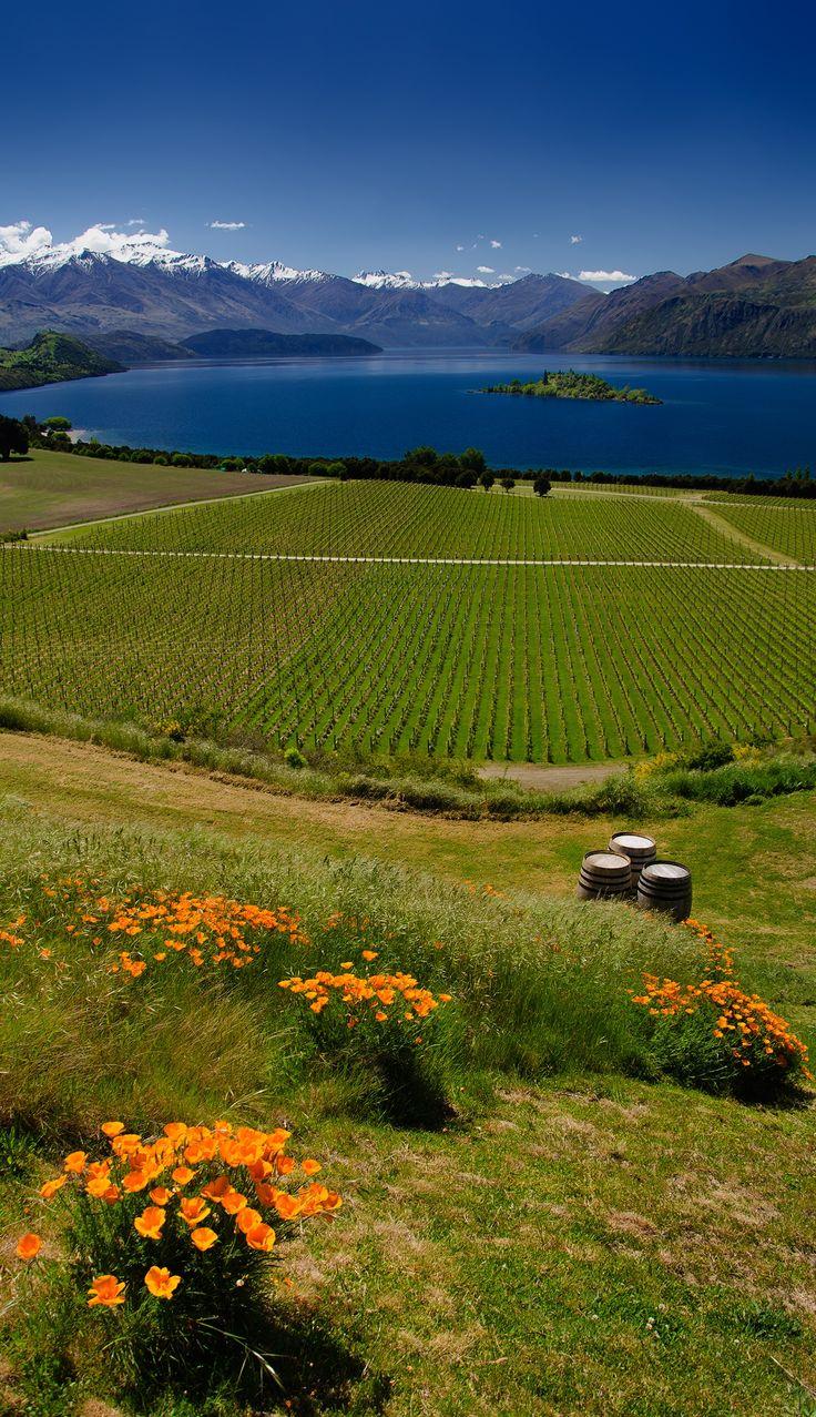 Rippon Winery - Looking onto Lake Wanaka, South Island , New Zealand