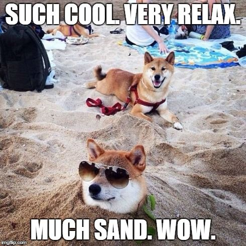 44838fb2375cf59c0ac90d84ce00edd1 at the beach beach fun best 25 doge meme generator ideas on pinterest doge, doge meme,Wow Meme Generator