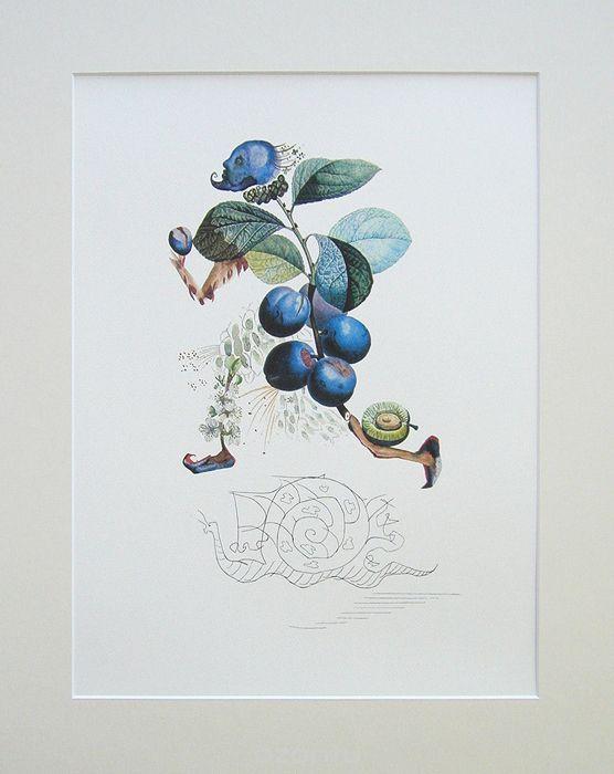 Сальвадор Дали. Слива, 1979. Серия FlorDali Les Fruits. Цветная литография | 13 500 р.