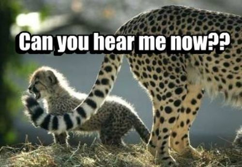 Cheetah Quotes And Sayings. QuotesGram