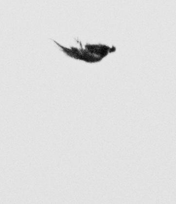 DYING BIRDS / © Trine Søndergaard & Nicolai Howalt