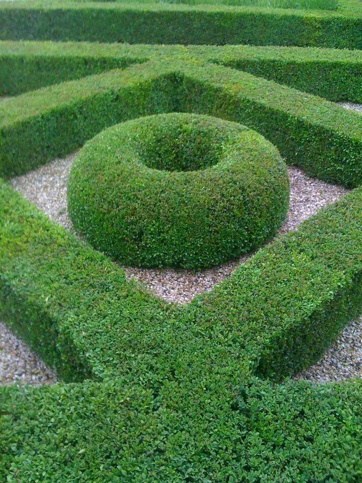 Boxwood jardines pinterest setos jardines y for Setos para jardin