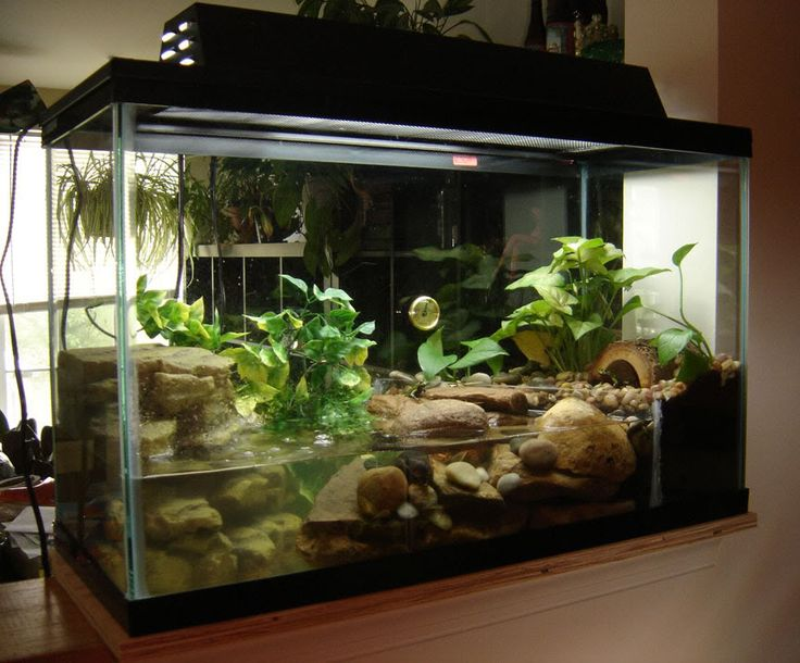 how to use a terrarium as a ecisystem lesson