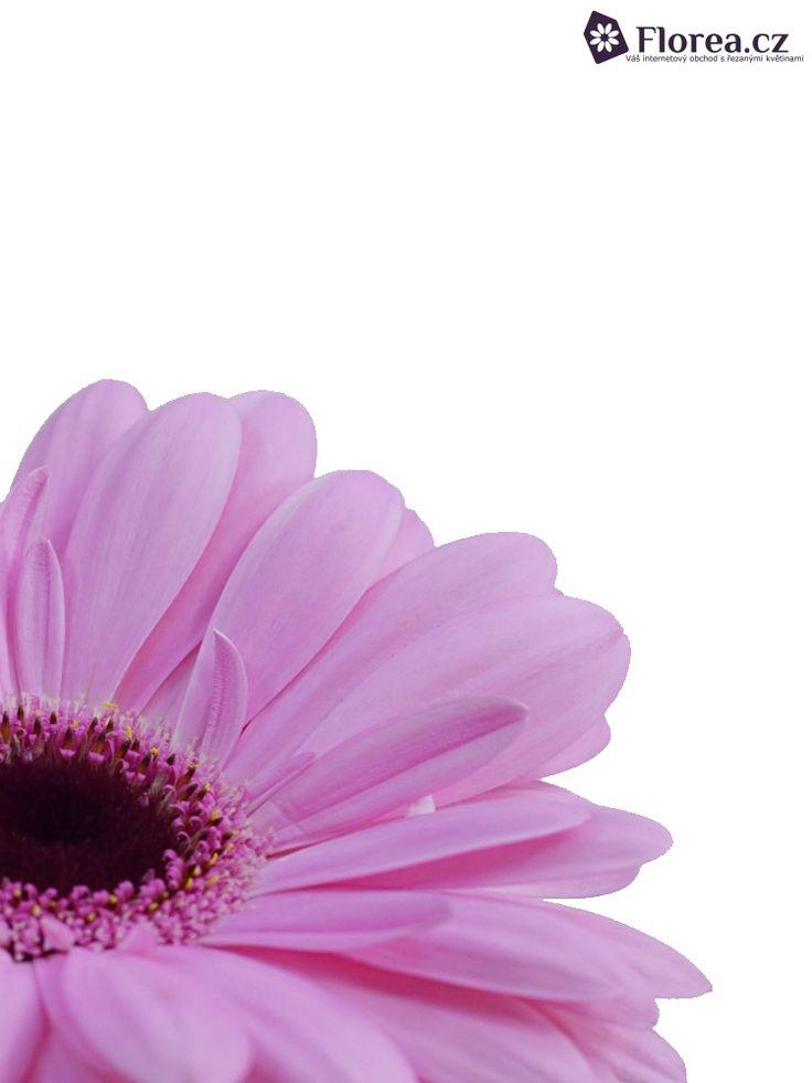 Gerbera Abraxas  http://www.florea.cz/produkty/gerbera-1 #gerbera #flowers