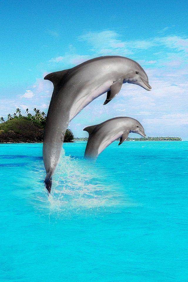 Jump dolphins jump