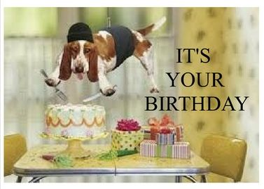 Birthday Card For A Dog Lover Hey They Don Need Jpg 377x269 Happy