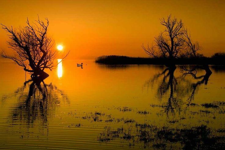 Kuş gölü