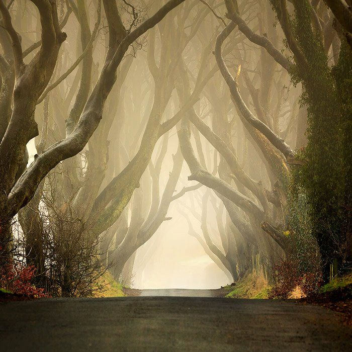 """""""One of the most beautiful roads I've ever seen is this country lane in Northern Ireland - named locally as The Dark Hedges. These trees are 300 years old and form an arch like tunnel that run the length of the Bregagh road near Armoy in County Antrim. They really do look like something straight out of a fairytale. To view this place in the morning is amazing, you can catch a good light or eerie mist."""