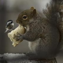 Bird and squirrel sharing bread....