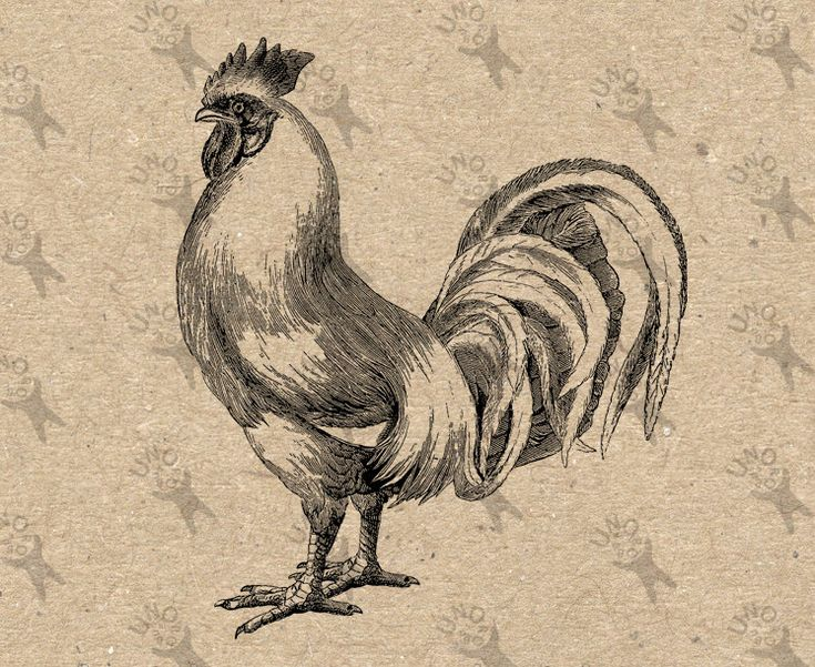 Antique image Cockerel Rooster Chicken Farm Instant Download Digital printable vintage picture clipart graphic burlap transfer HQ300dpi by UnoPrint on Etsy